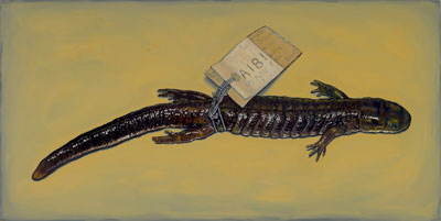 painting of blue spotted salamander