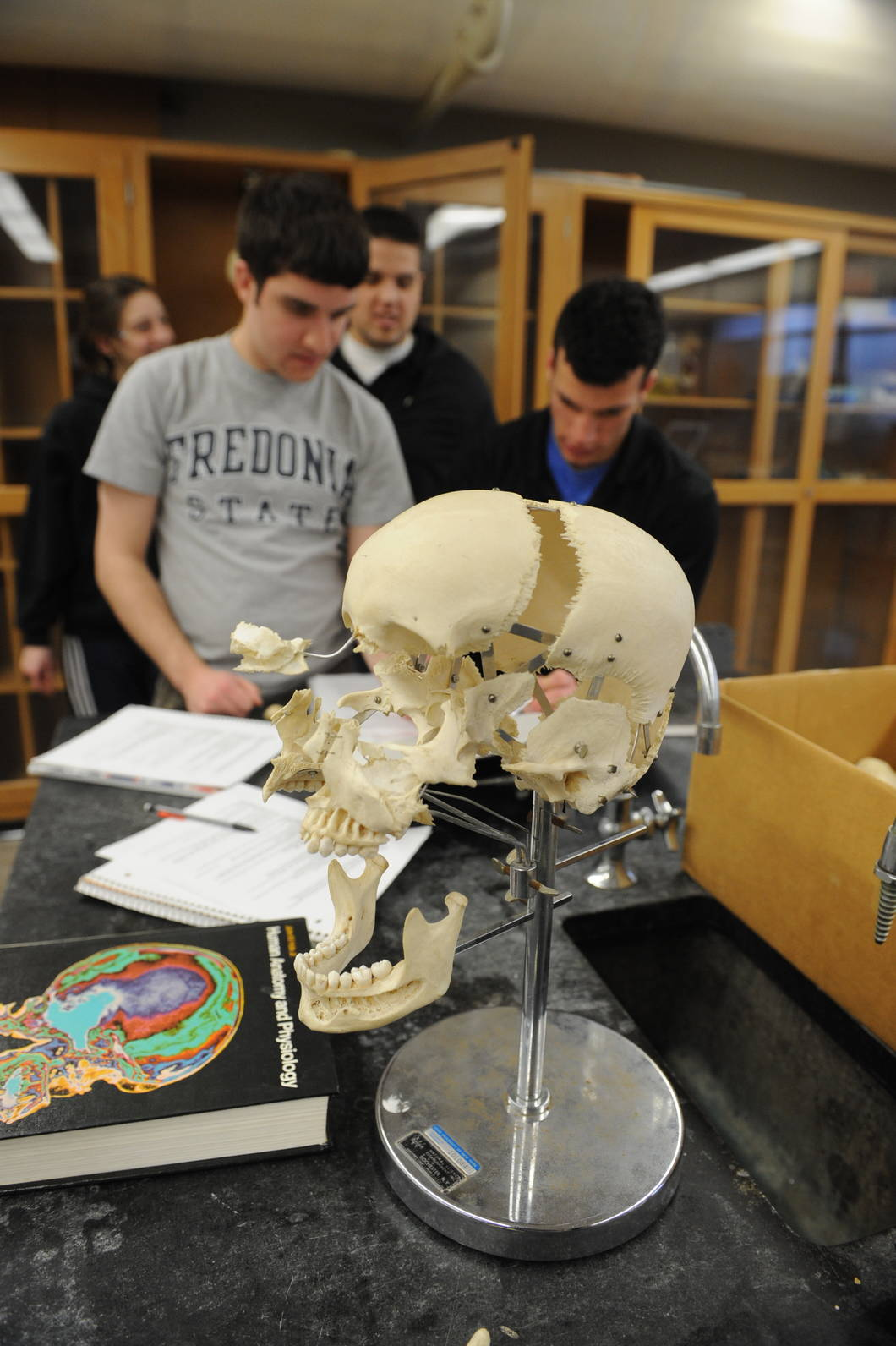Studying a human skull in Anatomy lab
