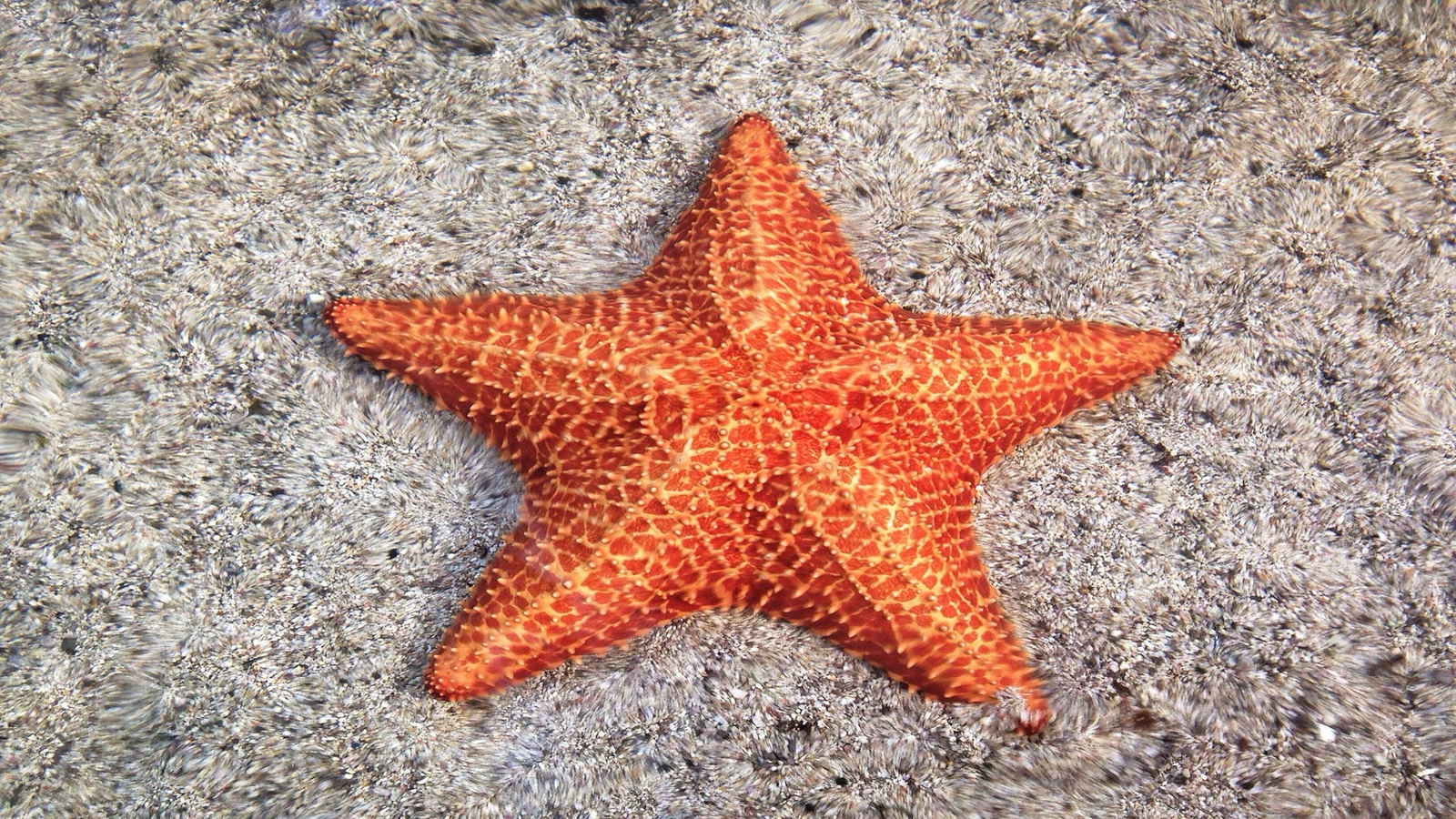 Picture of a Starfish - Starfish Early Alert